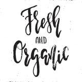 Vetor fresco e orgânico Imagens de Stock