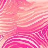 Vetor Fundo da zebra Fotos de Stock Royalty Free