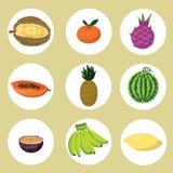 Vetor: grupo de frutos exóticos Foto de Stock