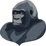 Vetor head gorilla. Stock Photo