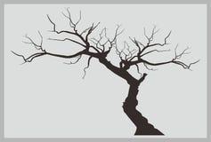 Vetor inoperante da árvore Fotos de Stock Royalty Free