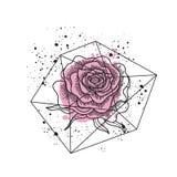 Vetor isolado flor da rosa do rosa ilustração stock