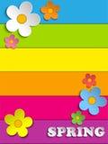 A mola bonita floresce o fundo do arco-íris Imagem de Stock