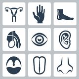 Vetor organs icons set Stock Images