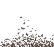 Vetor preto das borboletas Fotos de Stock
