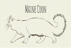 Vetor que tira Maine Coon Foto de Stock