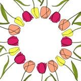 Vetor redondo do fundo do quadro da flor da tulipa Imagens de Stock