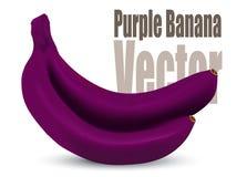 Vetor roxo da banana ilustração stock