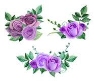 Vetor roxo das rosas da aquarela Fotografia de Stock Royalty Free