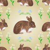 Vetor sem emenda das flores do coelho e da mola da textura Fotos de Stock Royalty Free