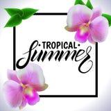 Vetor tropical do verão Imagem de Stock