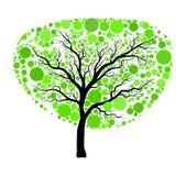 Vetor verde da árvore da mola isolado no fundo branco Fotografia de Stock