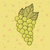Vetor verde das uvas Mão verde das uvas tirada Fotografia de Stock Royalty Free