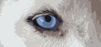 Vetores dos olhos azuis do cão Imagens de Stock Royalty Free