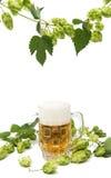 Vetri di birra con i coni di luppolo Fotografia Stock