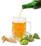 Vetri di birra con i coni di luppolo Fotografia Stock Libera da Diritti