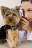 vetrinarian的狗 图库摄影