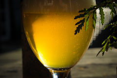 Vetro con birra fredda Fotografie Stock