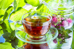 Vetro del tè di erbe della camomilla Fotografie Stock Libere da Diritti
