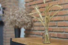 Vetro del vaso del grano jpg Immagini Stock Libere da Diritti