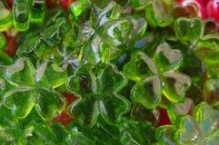 Vetro dell'acetosella del Cloverleaf Fotografie Stock