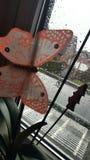 Vetro della natura di verde della pioggia della farfalla fotografie stock