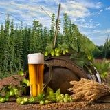 Vetro di birra con i coni di luppolo Fotografia Stock Libera da Diritti