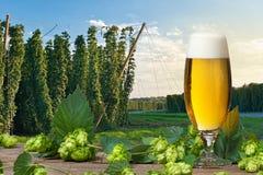 Vetro di birra con i coni di luppolo immagini stock libere da diritti