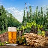 Vetro di birra con i coni di luppolo Immagine Stock Libera da Diritti