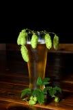Vetro di birra con il luppolo Fotografia Stock Libera da Diritti