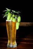 Vetro di birra con il luppolo Immagine Stock Libera da Diritti