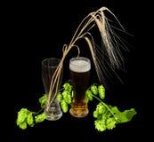 Vetro di birra, del ramo del luppolo e delle orecchie dell'orzo Fotografia Stock