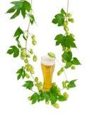 Vetro di birra e dei rami del luppolo su fondo leggero Immagine Stock