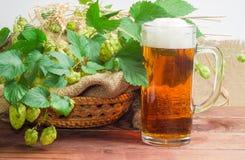 Vetro di birra, rami delle punte di luppolo, dell'orzo e del grano Fotografie Stock Libere da Diritti