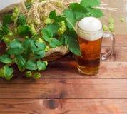 Vetro di birra, rami delle punte di luppolo, dell'orzo e del grano Fotografia Stock