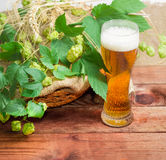 Vetro di birra, rami delle punte di luppolo, dell'orzo e del grano Fotografie Stock
