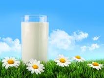 Vetro di latte nell'erba con le margherite Immagini Stock
