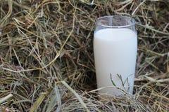 Vetro di latte su fieno Fotografia Stock
