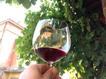 Vetro di vino Immagini Stock