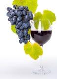 Vetro di vino rosso con il mazzo blu dell'uva Fotografia Stock