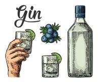 Vetro e bottiglia di gin e del ramo del ginepro con le bacche Fotografia Stock