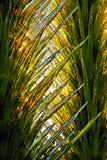Vetro e luce solare fotografia stock