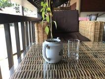 Vetro e pianta in vaso sulla tavola Immagini Stock