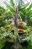 Vetro nei giardini Fotografia Stock