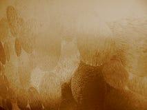 Vetro strutturato con tinta brunastra Fotografie Stock Libere da Diritti