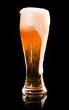 Birra chiara sul nero Fotografie Stock Libere da Diritti