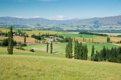 Vetro verde dell'alta collina della Nuova Zelanda Fotografie Stock