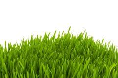 Vetro verde isolato Fotografia Stock Libera da Diritti