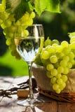 Vetro, vite e mazzo di vino bianco di uva Immagini Stock