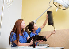 Vets nurses examining cat's x-ray Royalty Free Stock Images